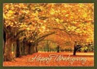 Canopy of Gold Thanksgiving Card