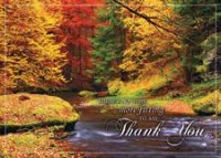 Splashes of Color Thanksgiving Card