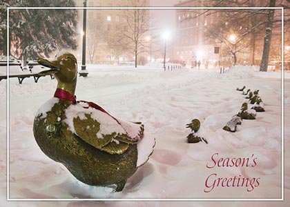 Boston Ducklings in Winter Holiday Card