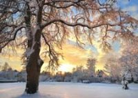 Winter Sunrise charity holdiay card supporting Environmental Defense Fund