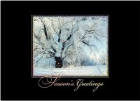 Glistening Tree Winter Scenes Dramatic Holiday Cards