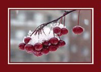 Bed Berries (BCF0912) Charity Holiday Card